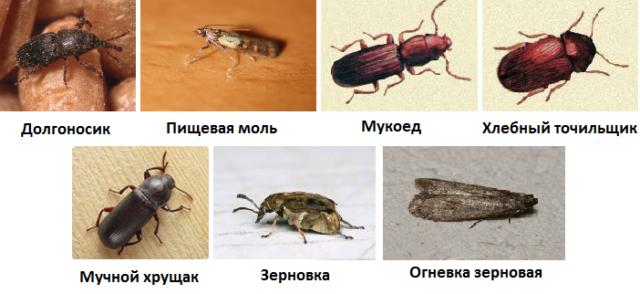 Как избавиться от вредителей и насекомых