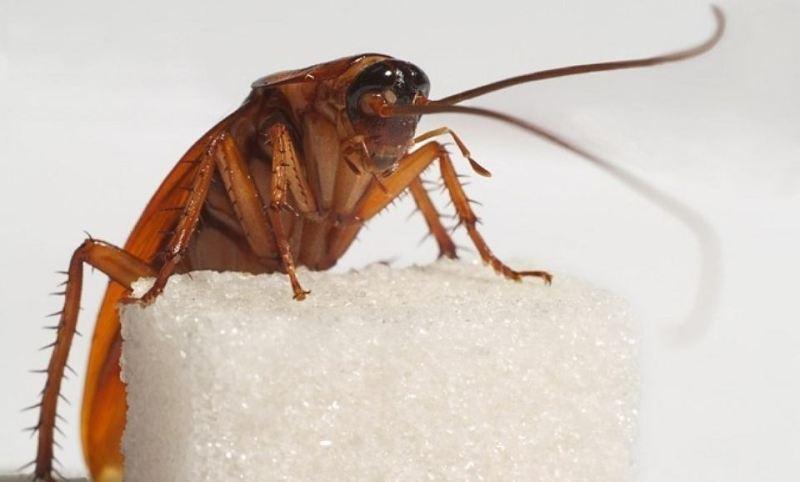Травить тараканов